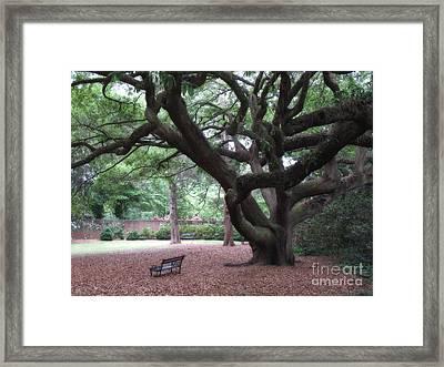Oak Trees - Hopeland Gardens - Aiken South Carolina Framed Print by Kathy Fornal