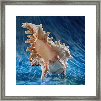 Ocean Breeze 1 Framed Print by Tom Druin