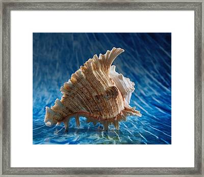 Ocean Breeze 2 Framed Print by Tom Druin