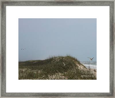 Ocracoke Dunes And Gulls Framed Print by Cathy Lindsey
