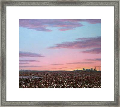 October Cotton Framed Print by James W Johnson