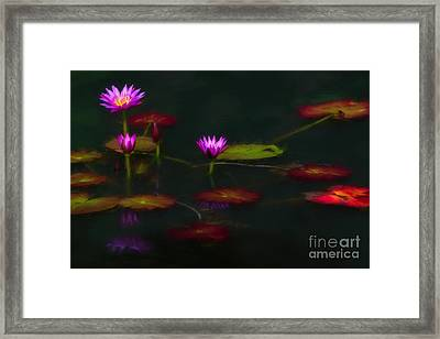 October Lilies Framed Print by Doug Sturgess