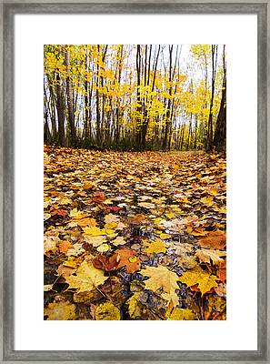 October Maple Forest Framed Print by Mircea Costina Photography