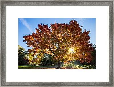 October Maple  Framed Print by Mircea Costina Photography