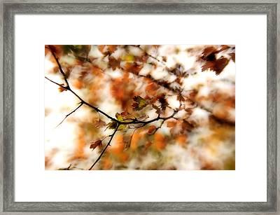 October Framed Print by Reka Lendvai