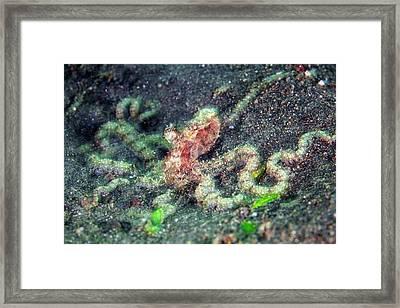 Octopus Framed Print by Ethan Daniels