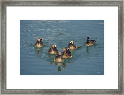 Odd Goose Out Framed Print by Mary Machare