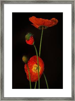 Odyssey Framed Print by Toni Chanelle Paisley