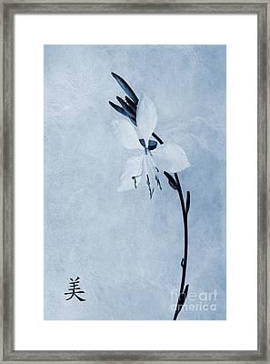 Oenothera Lindheimeri Cyanotype Framed Print by John Edwards