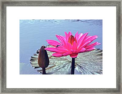 Of A Tropical Nature Framed Print by Byron Varvarigos