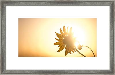 Of Sun And Flowers Framed Print by Peter Tellone