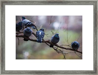 Of The Personal Opinion - Featured 3 Framed Print by Alexander Senin