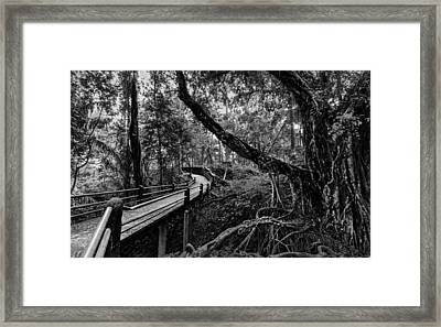 Off The Path Framed Print by Julian Cook