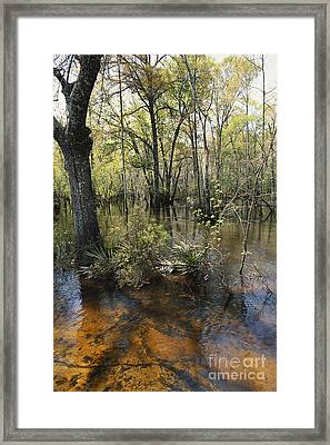 Ohoopee River, Georgia Framed Print by William H. Mullins