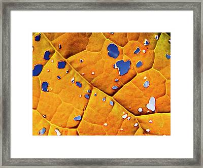Oil Seed Rape Leaf (brassica Napus) Framed Print by Ian Gowland