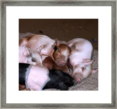 Oink Framed Print by Camille Lopez