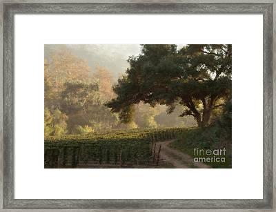 Ojai Vineyard Framed Print by Kathleen Gauthier