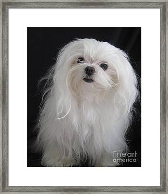 Ok Ok You Got My Attention Framed Print by Margaret Newcomb