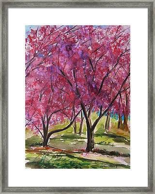 Okame Cherries Framed Print by John Williams