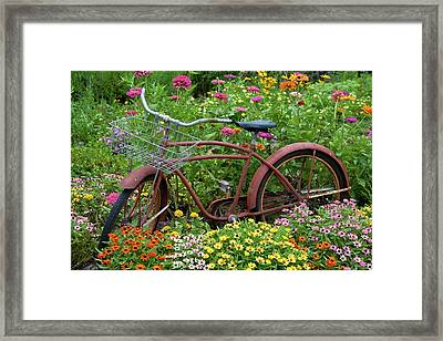 Old Bicycle With Flower Basket Framed Print by Richard and Susan Day