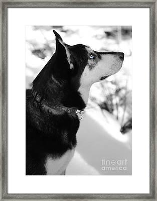 Old Blue Eye Framed Print by Carol Groenen