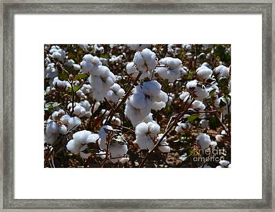Old Cotton Fields Back Home Framed Print by Beverly Guilliams