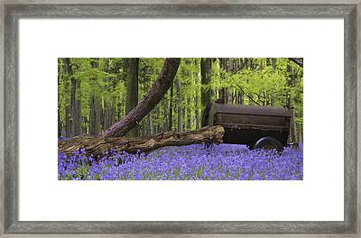 Old Farm Machinery In Vibrant Bluebell  Spring Forest Landscape Framed Print by Matthew Gibson