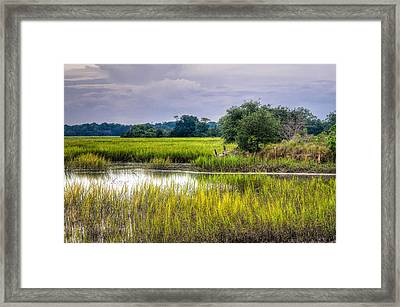 Old Fence Line At The Whale Branch Framed Print by Scott Hansen