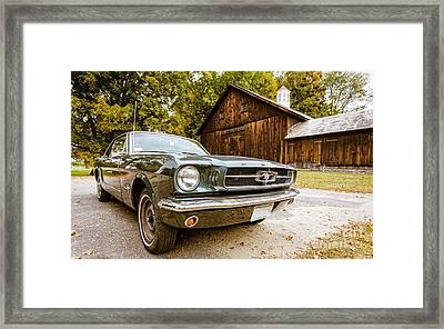 Horses Let Out Of The Barn Framed Print by Edward Fielding