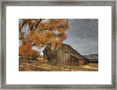 Old Friends Framed Print by Donna Kennedy