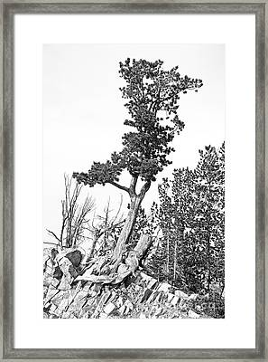 Old Gnarly Tree Framed Print by Edward Fielding