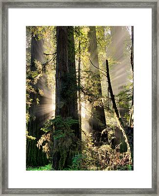Old Growth Forest Light Framed Print by Leland D Howard