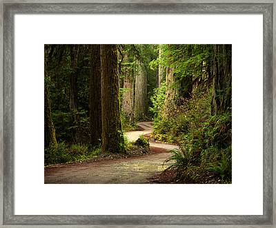 Old Growth Forest Route Framed Print by Leland D Howard