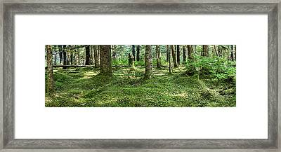 Old Growth Forest, Tongass National Framed Print by Panoramic Images
