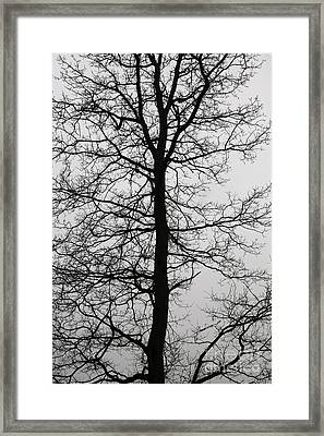 Old Oak In The Grey Sky.  Framed Print by Tanya Polevaya