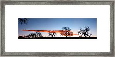 Old Oak Trees On Old Humboldt Road Framed Print by Robert Woodward