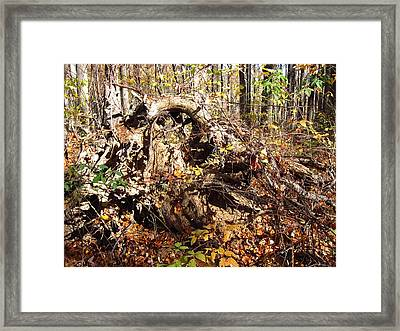 Old Rag Hiking Trail - 12123 Framed Print by DC Photographer
