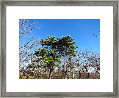 Old Rag Hiking Trail - 121242 Framed Print by DC Photographer