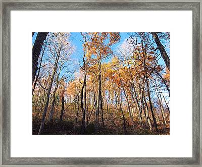 Old Rag Hiking Trail - 121258 Framed Print by DC Photographer