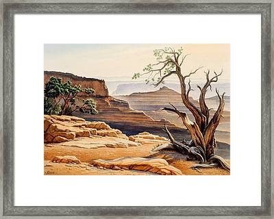 Old Tree At The Canyon Framed Print by Paul Krapf