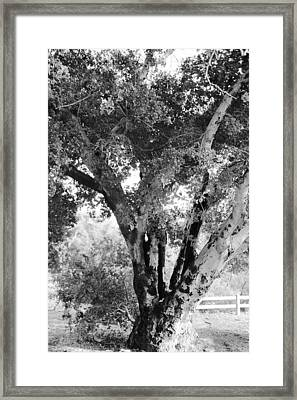 The Old Tree Framed Print by Gilbert Artiaga