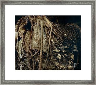Old Tree On Broken Wall Framed Print by Yali Shi
