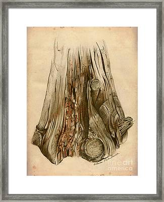 Old Tree Stump - Sketch Chalk Charcoal Sepia - Elena Yakubovich Framed Print by Elena Yakubovich