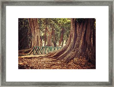 Old Trees In Pamplemousse Garden. Mauritius Framed Print by Jenny Rainbow