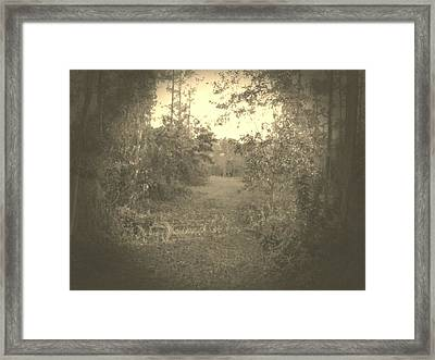 Olden Look Framed Print by Chasity Johnson