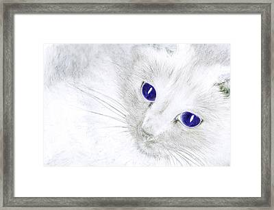 Ole Blue Eyes Framed Print by Camille Lopez