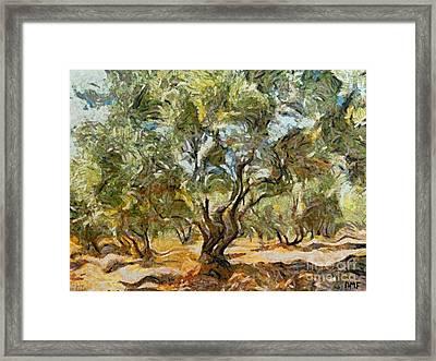 Olive Grove Framed Print by Dragica  Micki Fortuna