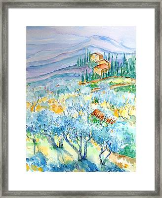 Olive Groves Of Cozille Tuscany  Framed Print by Trudi Doyle