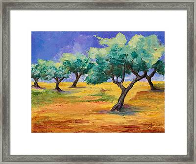 Olive Trees Grove Framed Print by Elise Palmigiani