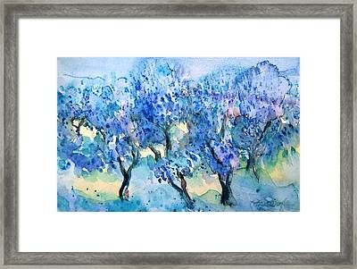 Olive Trees In A Tuscan Garden  Framed Print by Trudi Doyle
